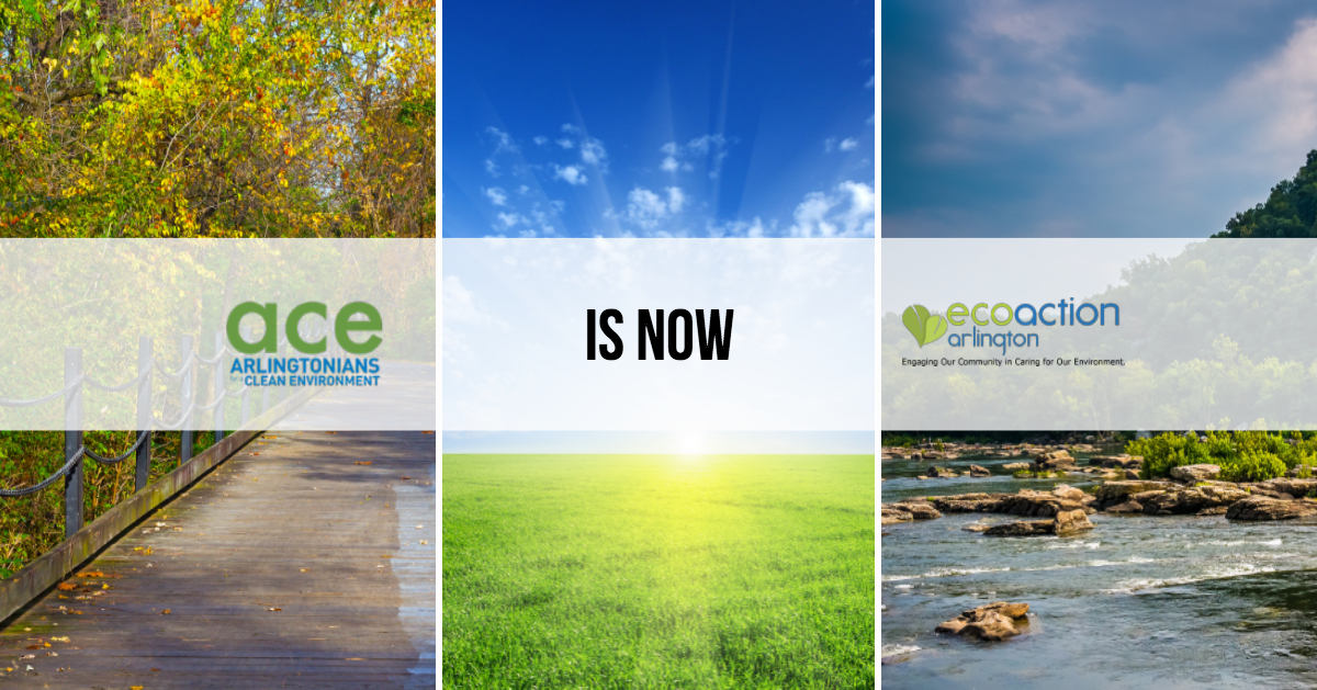 Name change to EcoAction Arlington